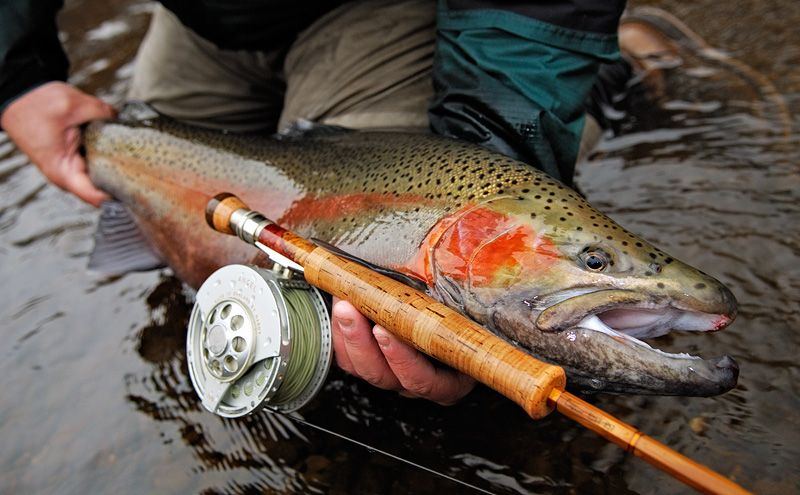 Michigan Fly Fishing - Michigan Steelhead Fly Fishing - Guided Fly Fishing for Steelhead Michigan