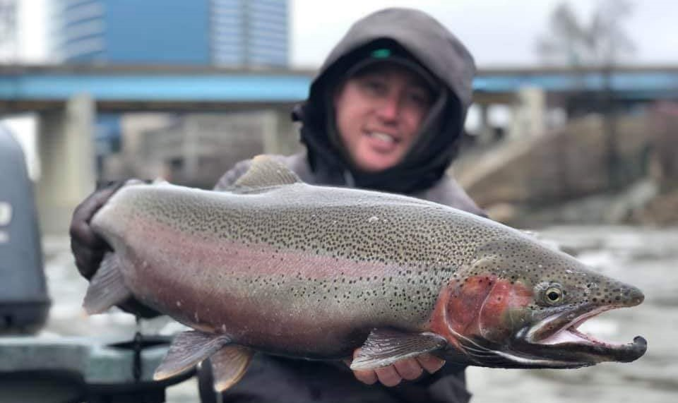 Michigan Fishing Reports - Steelhead