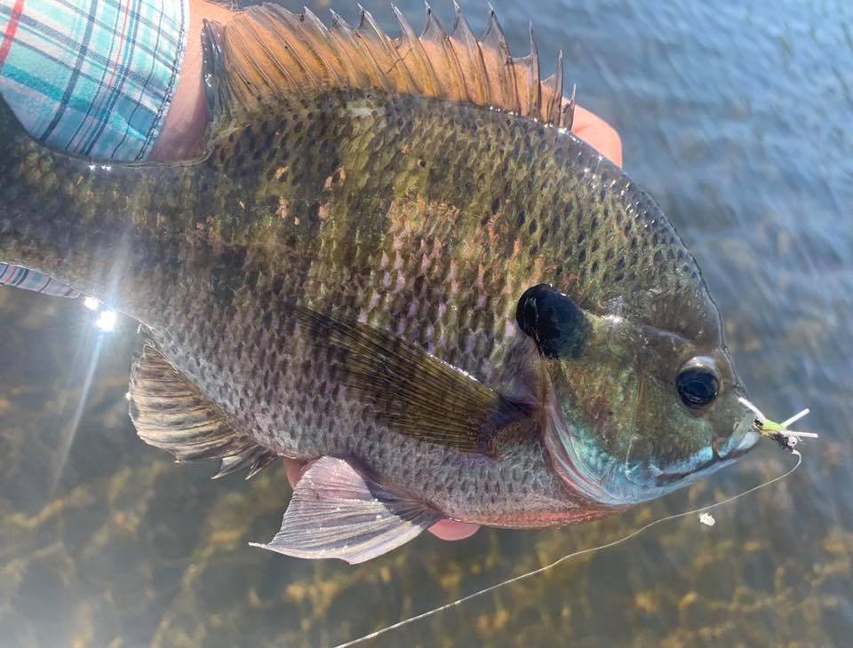 Michigan Pan Fish Fishing