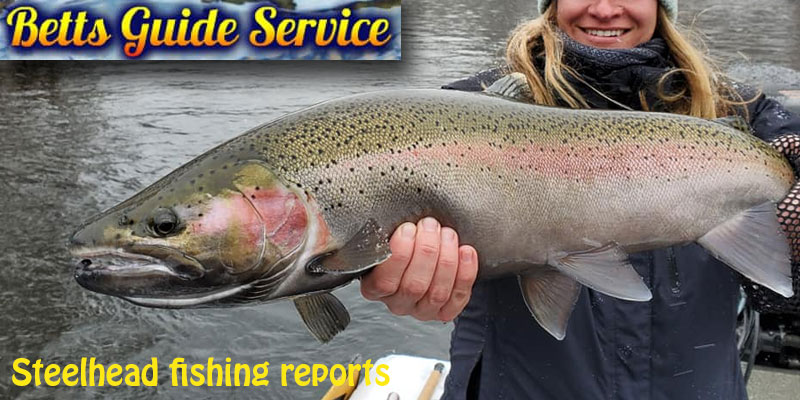 How to select the bait and lure for steelhead trout fishing?