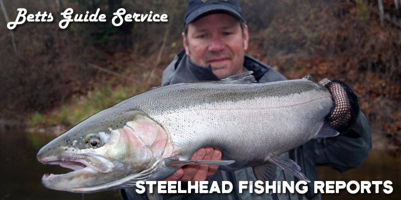 Steelhead Fishing Reports: Steelhead Trout vs. Salmon