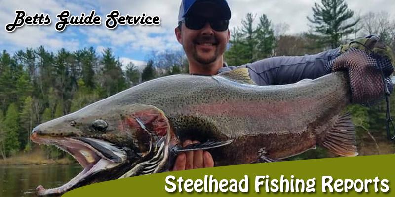 Steelhead Fishing Reports: How to Read it Right?