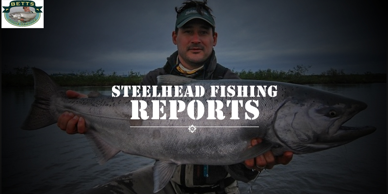 What are the Best Baits for Steelhead Fishing?