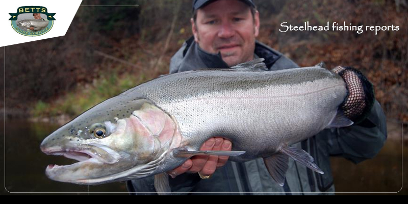 Guide to Selecting the right bait for steelhead fishing
